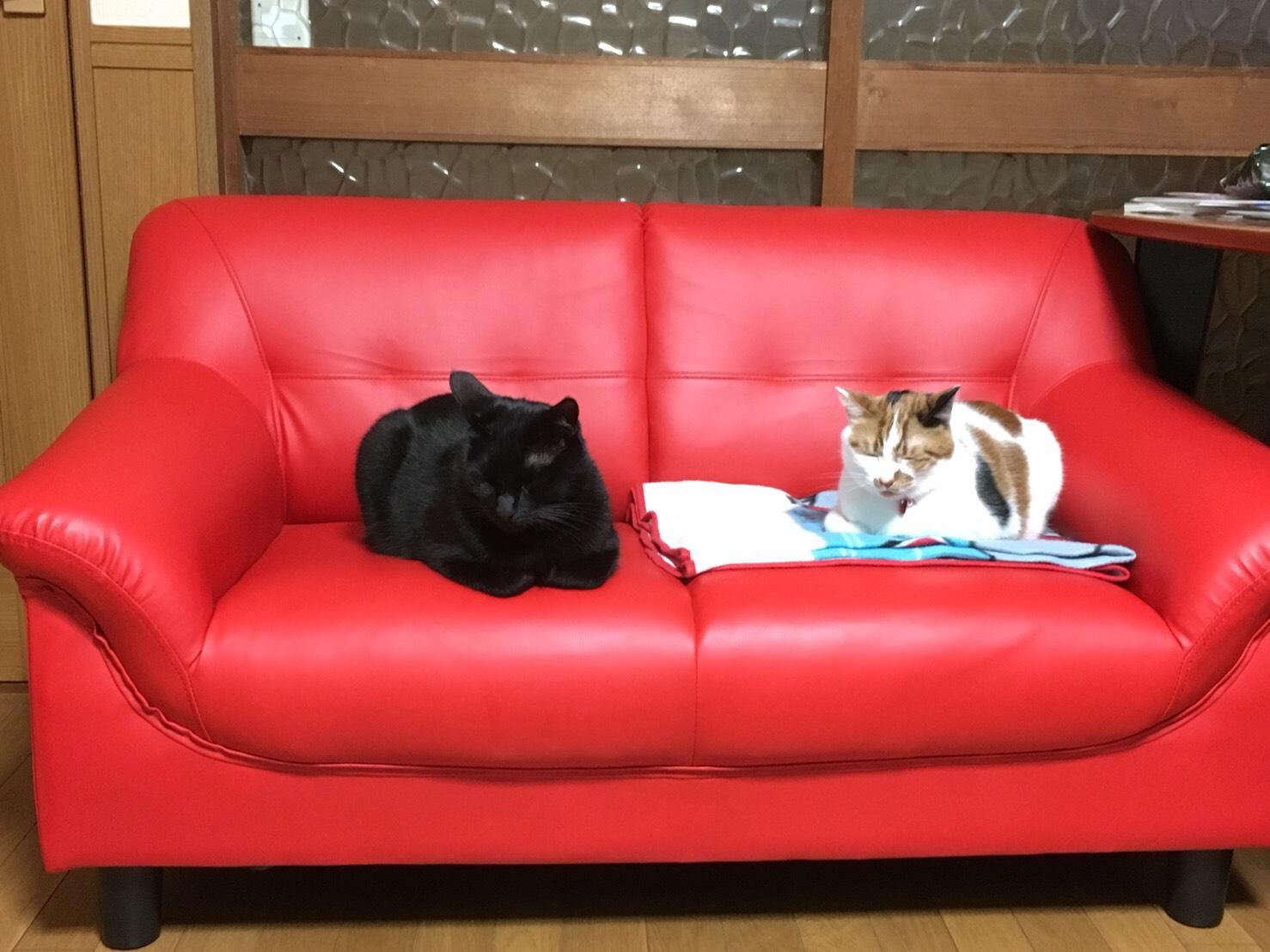 インスタ映え♪真っ赤なソファー